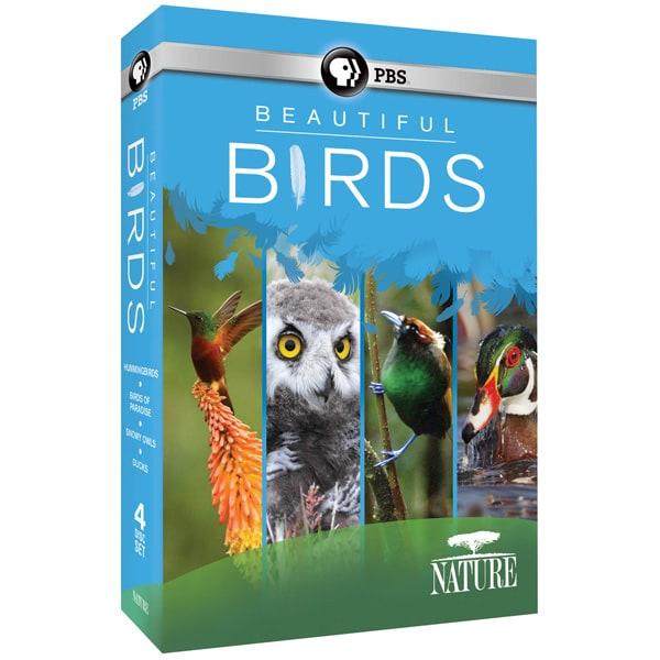 NATURE: Beautiful Birds DVD | Shop.PBS.org