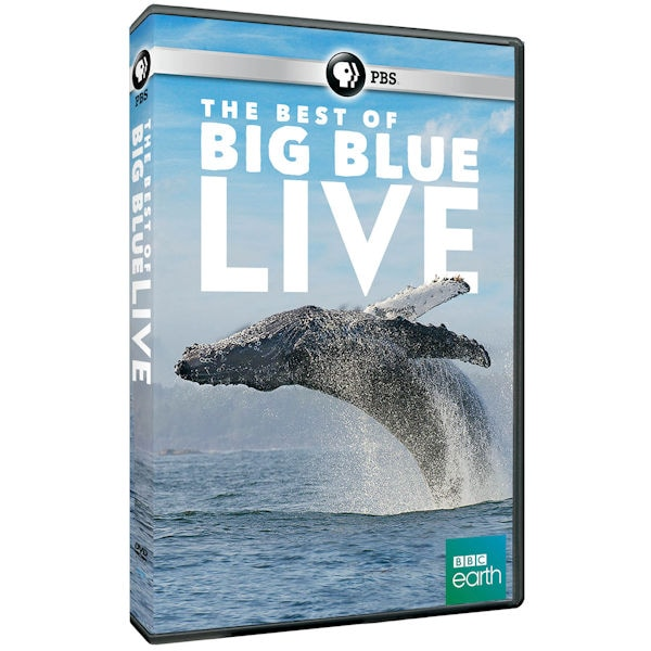 Purchase The Best of Big Blue Live