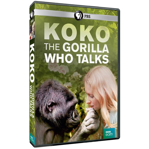 Purchase Koko: The Gorilla Who Talks
