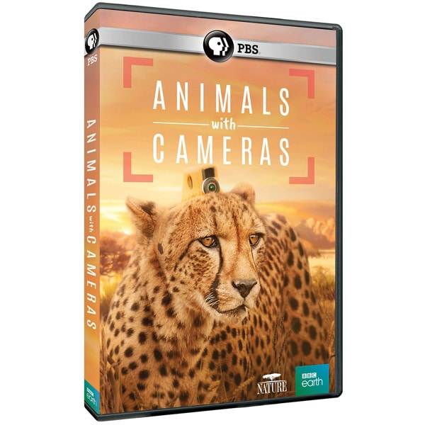 NATURE: Animals With Cameras DVD