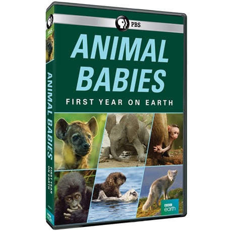 Animal Babies: First Year on Earth DVD