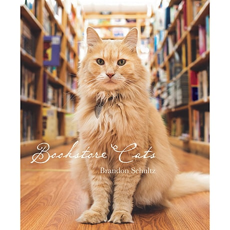 Bookstore Cats Book by Brandon Schultz