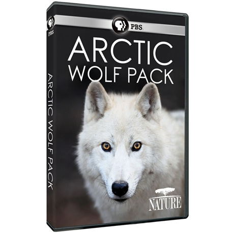 NATURE: Arctic Wolf Pack DVD
