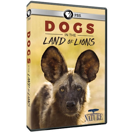 NATURE: Dogs in the Land of Lions DVD