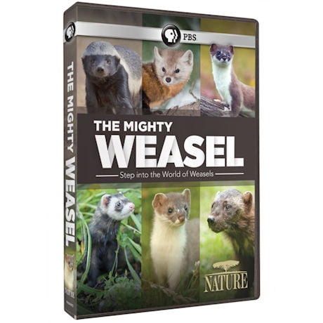 NATURE: The Mighty Weasel DVD