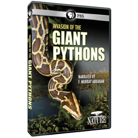 NATURE: Invasion of the Giant Pythons (2016) DVD