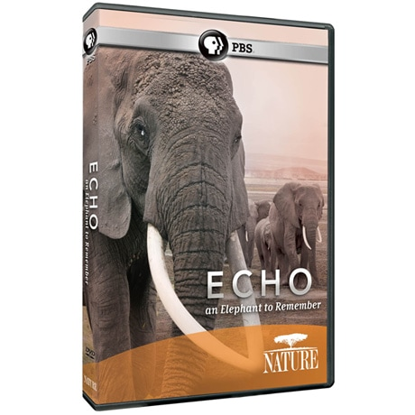NATURE: Echo: An Elephant to Remember