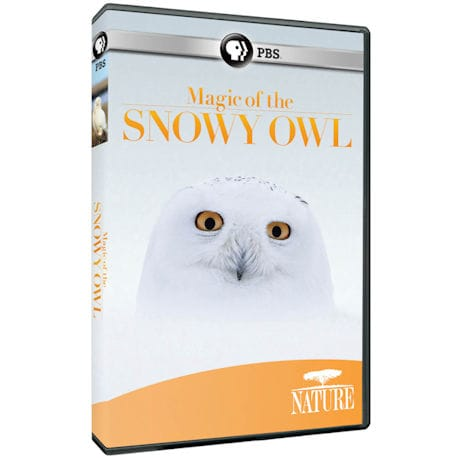 NATURE: Magic of the Snowy Owl DVD