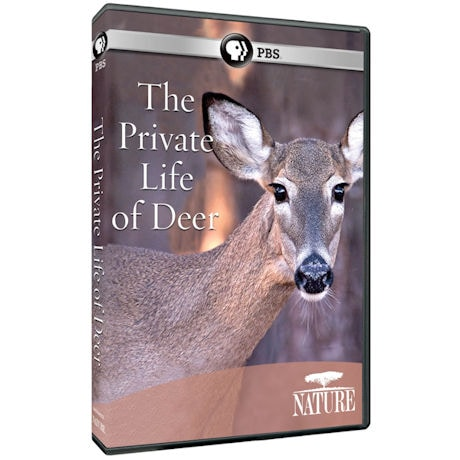 NATURE: The Private Life of Deer DVD