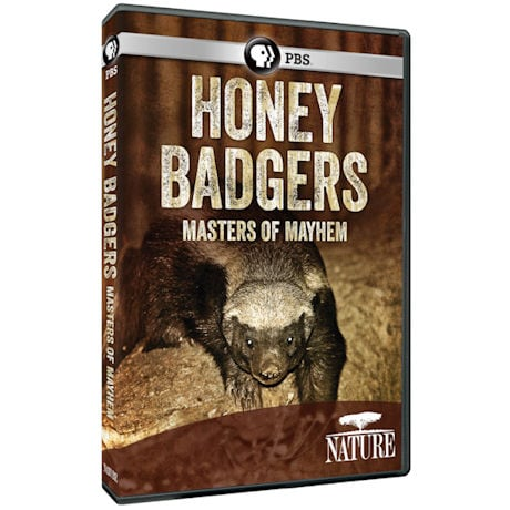 NATURE: Honey Badgers: Masters of Mayhem DVD