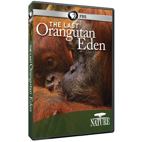 NATURE: The Last Orangutan Eden DVD
