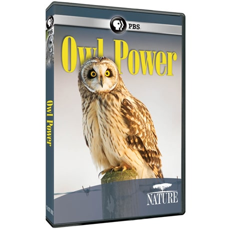 NATURE: Owl Power DVD