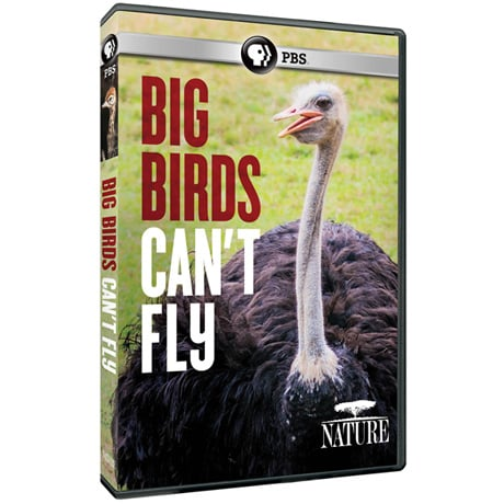 NATURE: Big Birds Can't Fly DVD