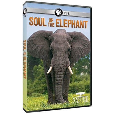 NATURE: Soul of the Elephant DVD