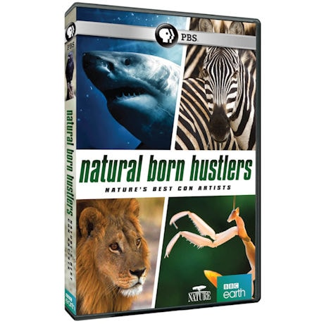 NATURE: Natural Born Hustlers DVD
