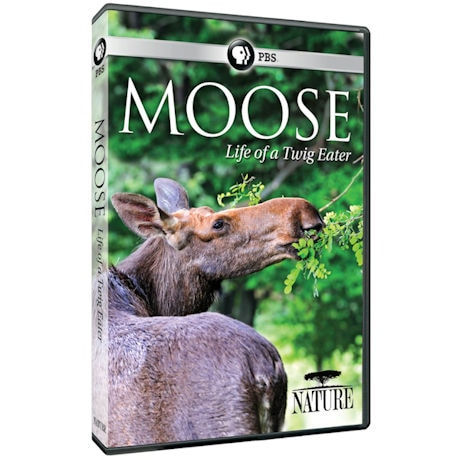 NATURE: Moose: Life of a Twig Eater DVD