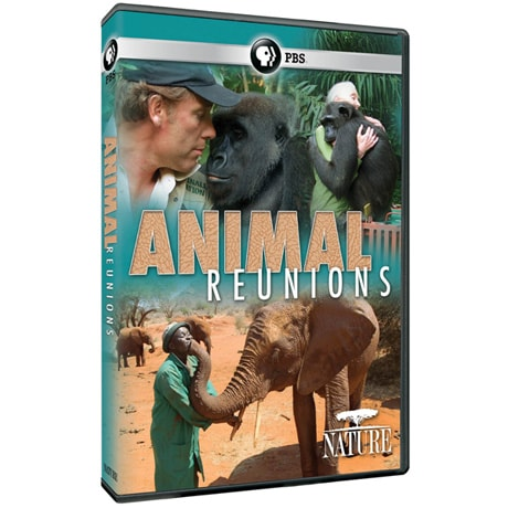 NATURE: Animal Reunions DVD