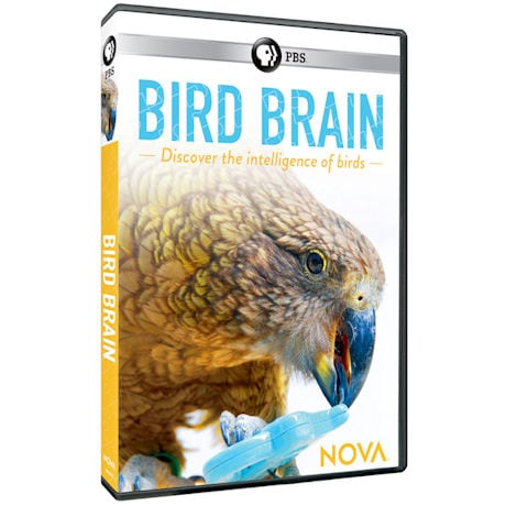 NOVA: Bird Brain DVD