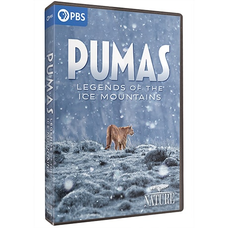 NATURE: Pumas - Legends of the Ice Mountains DVD