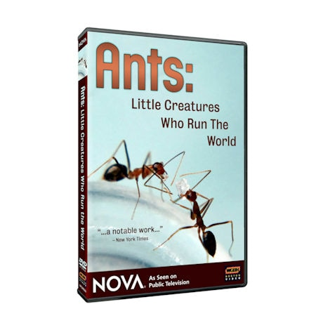 NOVA: Ants: Little Creatures Who Run the World DVD