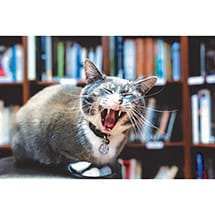 Alternate Image 1 for Bookstore Cats Book by Brandon Schultz