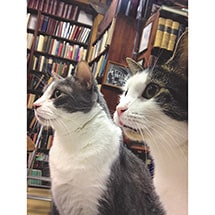 Alternate Image 4 for Bookstore Cats Book by Brandon Schultz