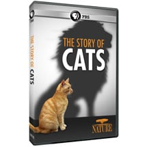 NATURE: The Story of Cats