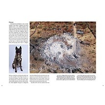 Alternate Image 3 for Hero Dogs: Secret Missions and Selfless Service (Hardcover)