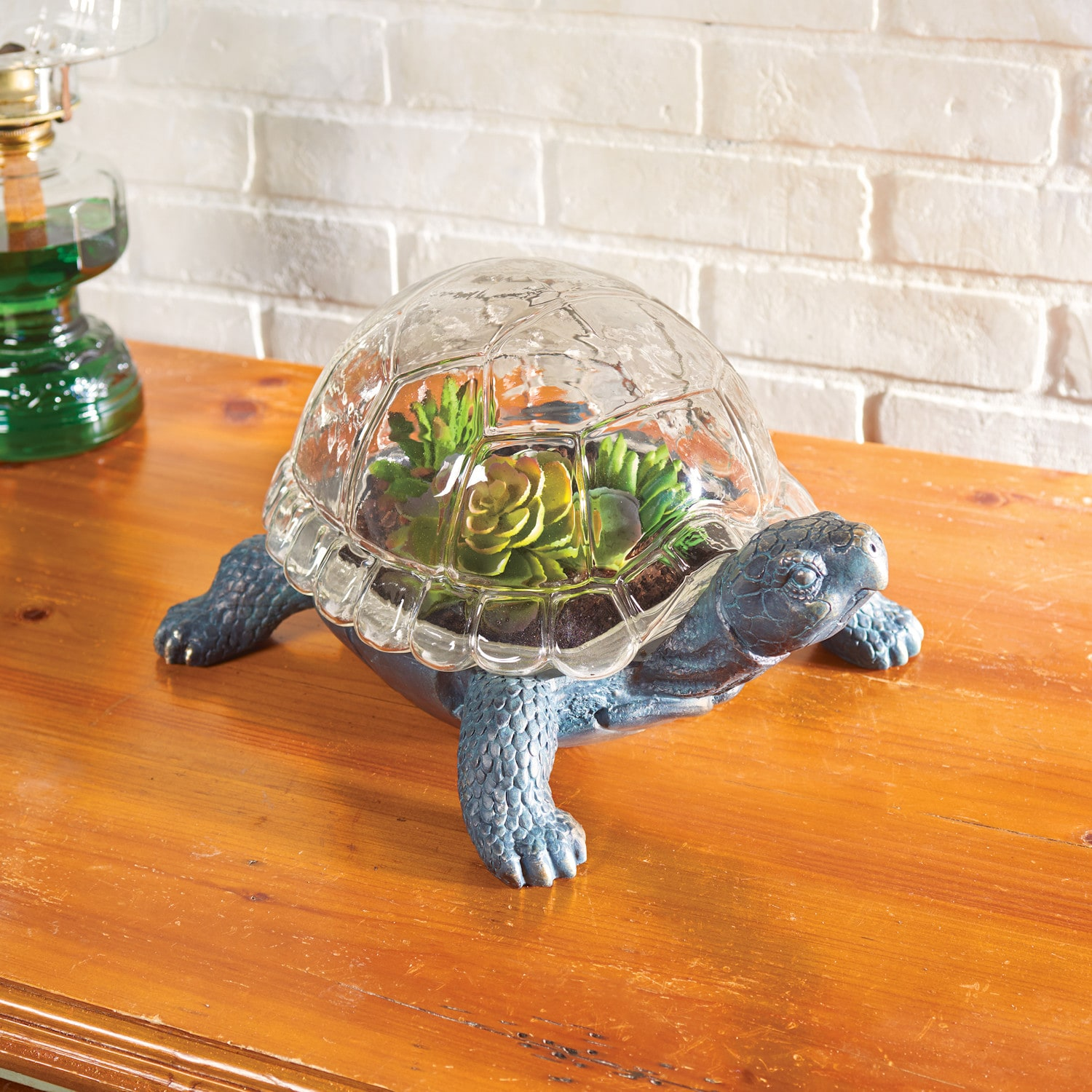 Turtle Terrarium Shop Pbs Org